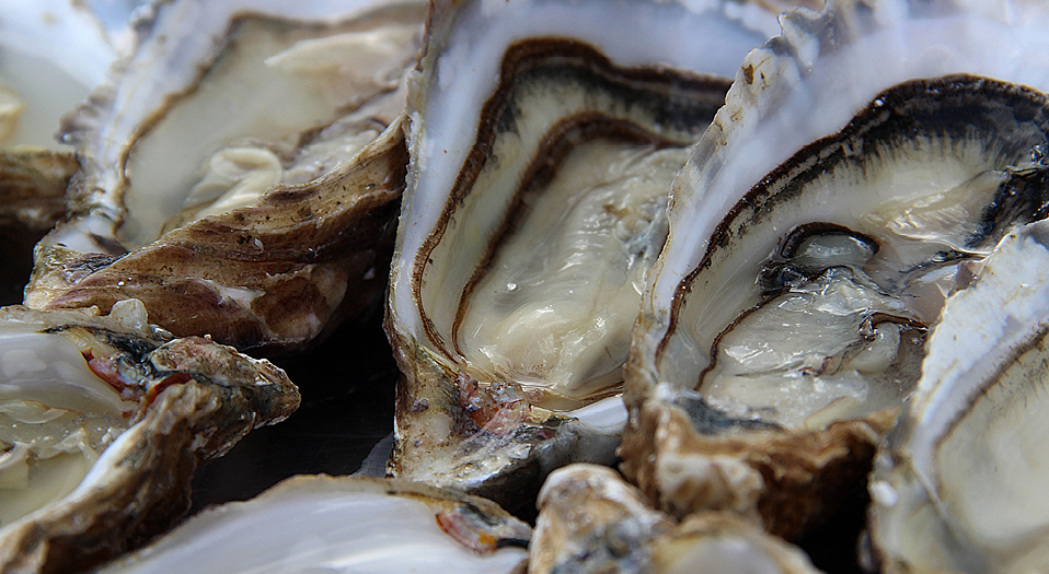 Feast_Oysters